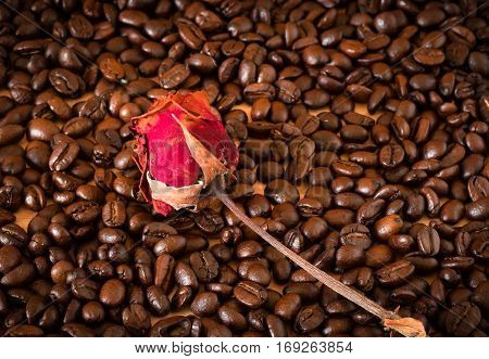 The Arabica And Robusta Coffee Beans With Sack Bag And Dried Red Rose Flower , Selective Focus At Ro