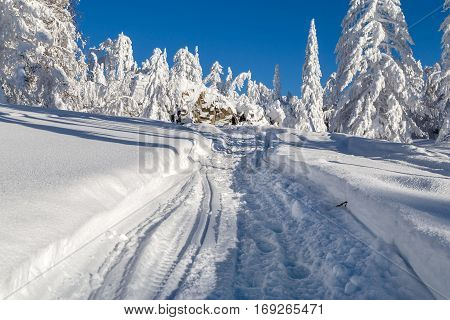 Winter snow-covered trees in the Ural mountains. Trace of a snowmobile leads into the distance.