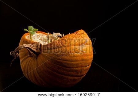 green sprout makes the way of dissected pumpkin