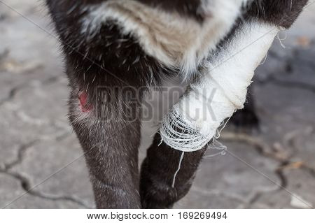 Wound on dog paw before having treatment at veterinary clinic