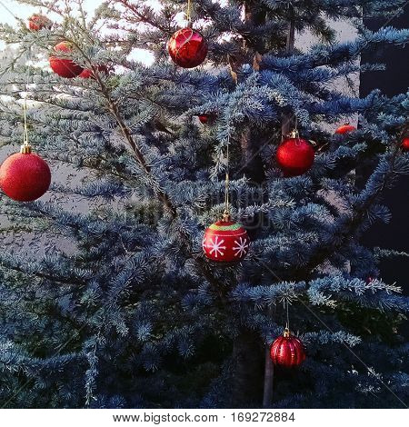 Large red ornaments on a tree outside