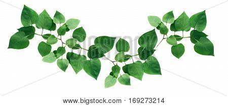 Twig with green leaves as border on white background