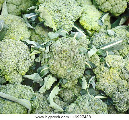 Fresh green broccoli on market, closeup