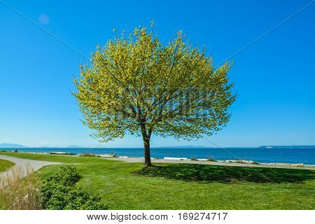 Lonely tree on Pacific Ocean shore. Peace of mind view on a bay in British Columbia Canada