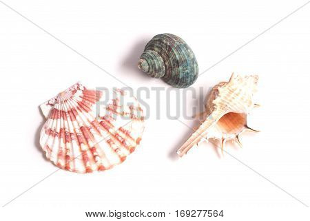 Set Of Beautiful Seashells Isolated On White Background,