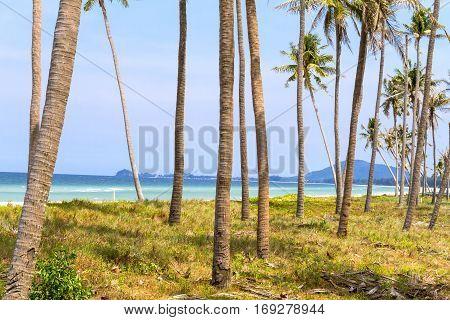Coconut and background on beach Ban Krut Prachuap Khirikhun Province Thailand
