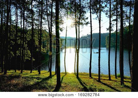 Silhouette of pine forest against sunlight in the morning at Pang Oung Lake (Pang Tong reservoir) Mae hong son Thailand.
