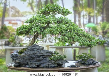 Bonsai and Penjing with miniature in a tray