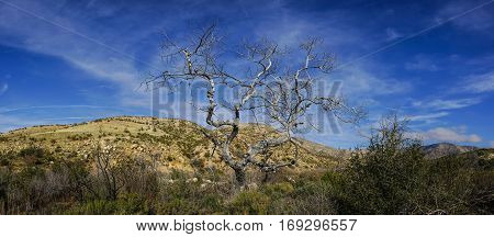 Twisted and gnarled dead tree stands above the grass and bushes of a desert wilderness.