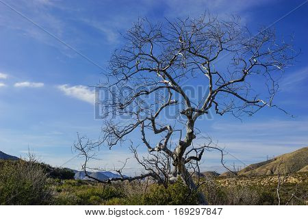 Spread of tree branches above the wilderness in California's Mojave Desert.