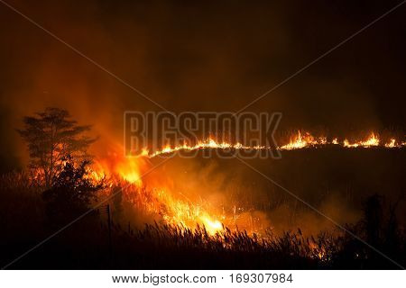 Fire Burning Grass and Trees on Night