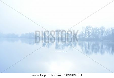 Fog over a lake with swimming ducks and water reflection. Tranquil scene.