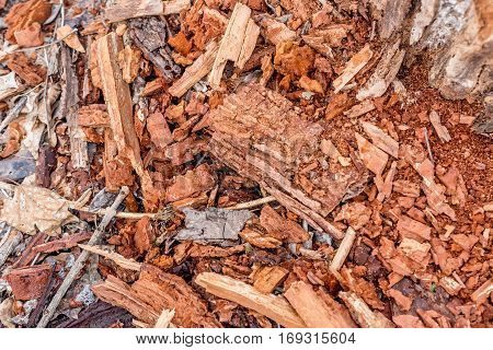 Close-up image of remains of tree trunk and wooden rot