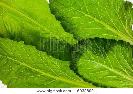 Edible green beetroot leaf pattern isolated on white background. Studio image of vegetable and herb, healthy natural organic food, cooking ingredient