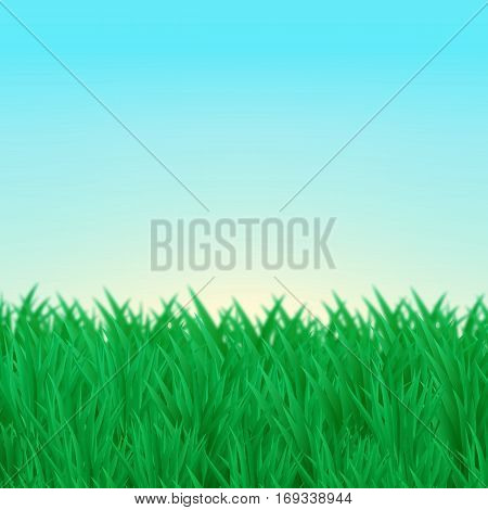 Vector illustration. The natural background. Thickets of green grass on the lawn, the blue sky.