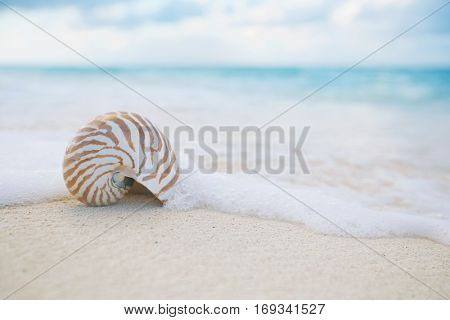 nautilus sea shell on golden sand beach with waves in  soft sunrise light, shallow dof