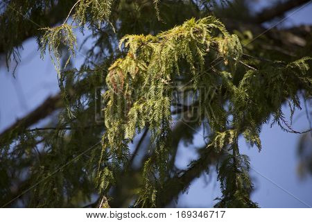 Cypress Tree In Fall