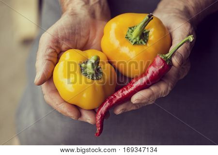 Top view of wrinkled woman's hands holding a handful of yellow bell pepper and sweet pointed pepper. Selective focus