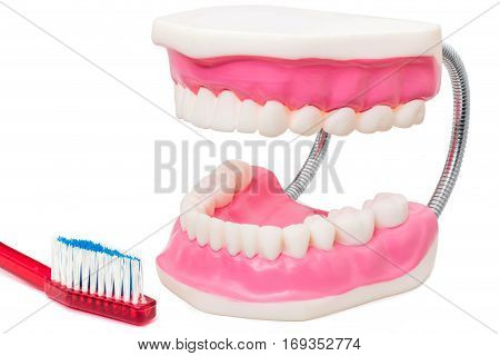 Macro close up still life of oversize human teeth prosthesis and toothbrush isolated on white background.