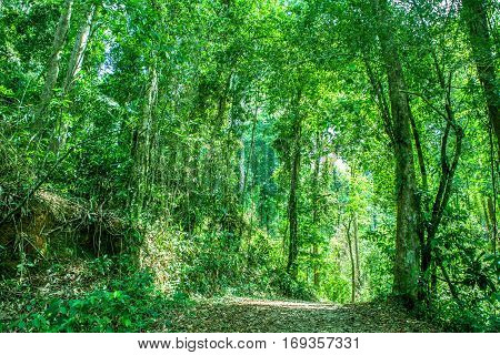 green forest natural walkway in sunny day light