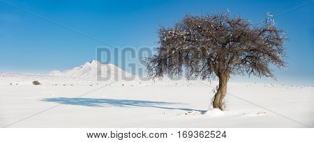The tree and Mount Erciyes in Turkey during winter