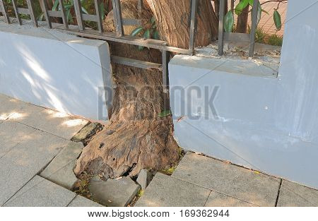 Structural damage caused by tree root in China