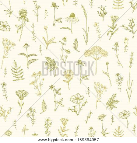 Vector hand drawn medicinal plant seamless pattern. Sketch, drawing, illustration of echinacea, calendula, clover, lavender, chamomile, dog rose, valerian, st. John's Wort plants.