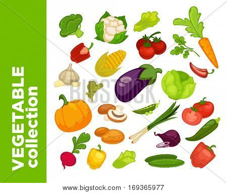 Vegetables icons set. Collection of vector vegetarian food illustration: tomato, pepper and pumpkin, cucumber, cabbage and onion, radish and carrot, eggplant, corn. Fresh healthy nutrition symbols