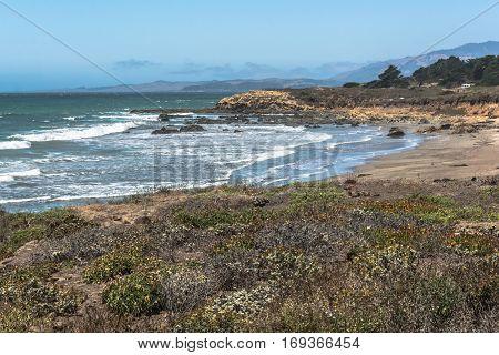 Vegetation along the coast of San Simeon, California