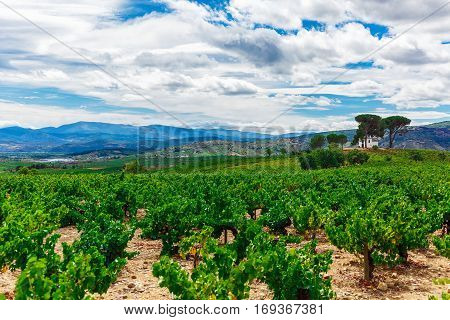Landscape with green field with vineyards and blue sky