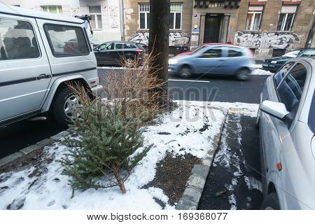 ZAGREB CROATIA - JANUARY 15 2017 : Old discarded pine trees in the street after Christmas period in Zagreb Croatia.