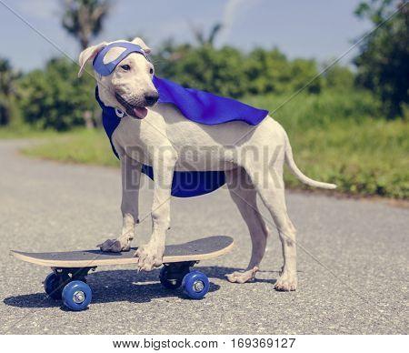 Dog Skateboard Street Mammal Costume Canine