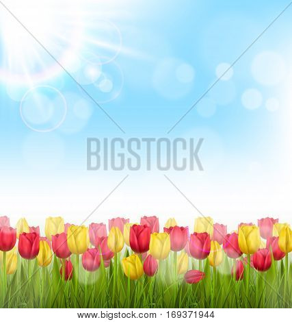 Green grass lawn with yellow and red tulips and sunlight on sky. Floral nature flower background