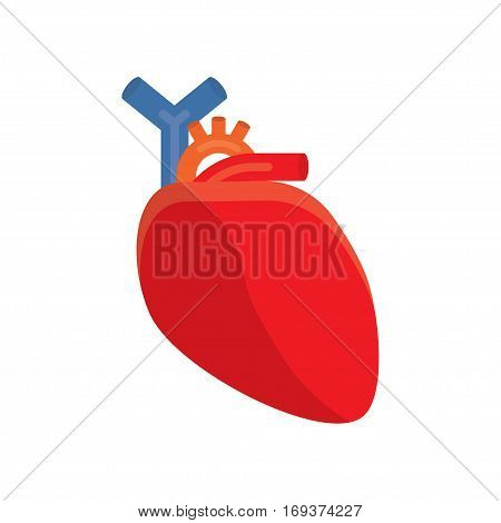 cardiology human heart. vector illustration on a white background