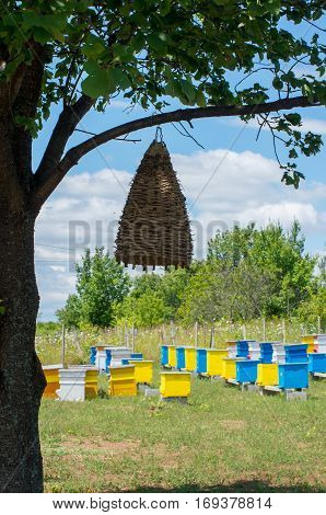 Beekeeping. Bee hives. Ancient beehive on a tree. Trap bee swarms.