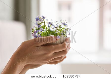 Hands of a young woman holding a dotted cup with forget-me-not.Flowers in a mug. Hands with flowers.Tenderness
