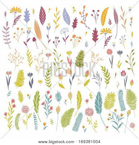 Vector hand drawn big flower and plant collection. Cute and elegant botanical floral set.