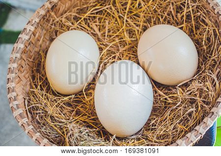 Ostrich eggs in a basket. Easter concept.