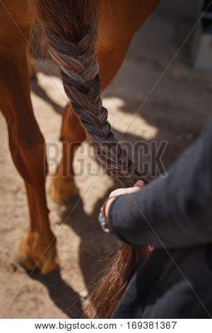 Closeup of woman's hands weaving a braid for a horse at a farm. Farmer's taking care of a horse.