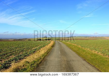 English Farmland With Farm Track And Rapeseed Fields