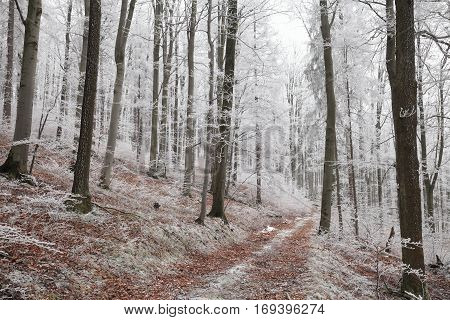 Forest path in winter scenery . Poland