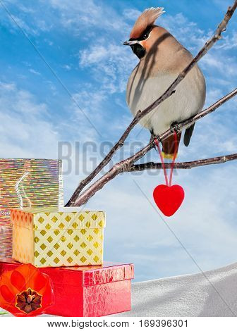 Collage with waxwing on a branch a red heart and gift box on the white snow against the blue sky