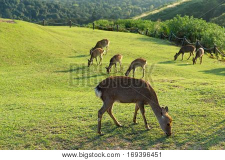 Group of deer at outdoor