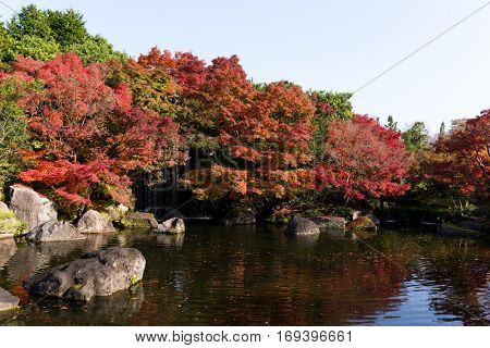 Japanese garden with maple tree