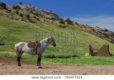 A lone horse stands in the mountains. Travel photos