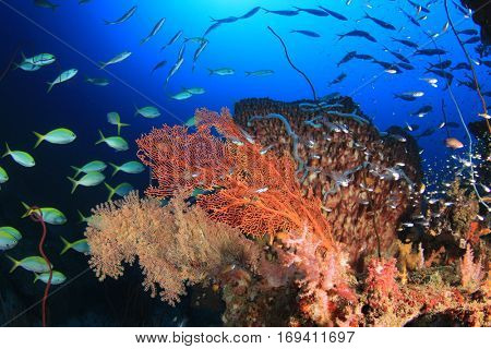 Pristine coral reef in Thailand