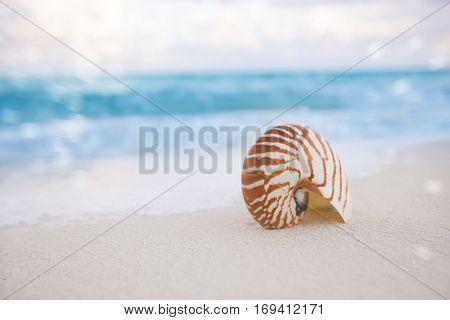 nautilus shell on white beach sand, against sea waves, shallow dof