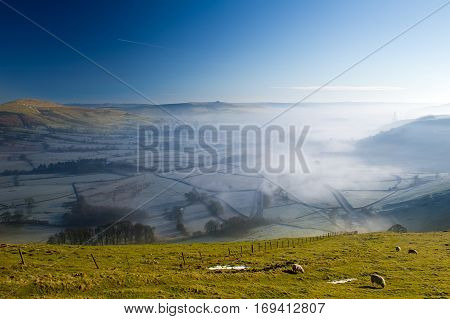 Group of Sheep Grazing Grass on a Hill. Early morning fog in background. Winnats Pass, Peak District National Park, UK.
