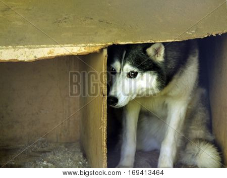 frightened stray dog on the street g
