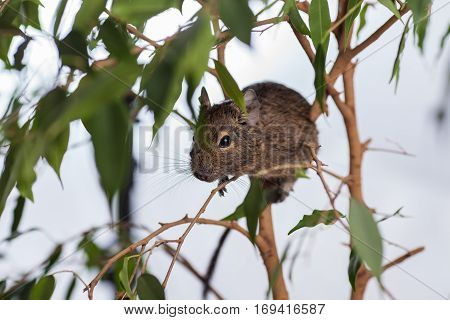 rodent on branch, background of wild nature